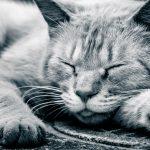 「眠くなる」のは体の声。四月のキーワードは「眠り」です。